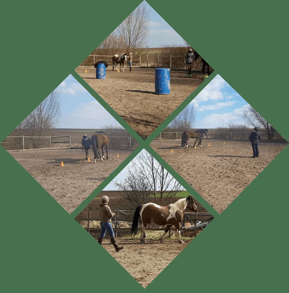Pferdeverhalten-collage_Kurs